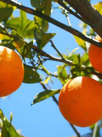 Jojobaöljy+Eteerinen Appelsiiniöljy
